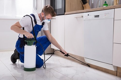 Remove Infestation from Your Property By Taking Eco-Friendly Pest Control Service
