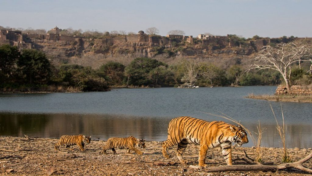 Rajasthan Wildlife Tourism - All Information