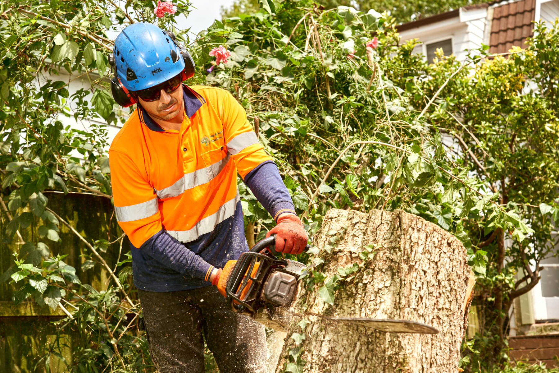 Preparing for Storms: The Importance of Professional Tree Cutting in Sydney
